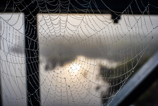 spider web with water droplets.jpg