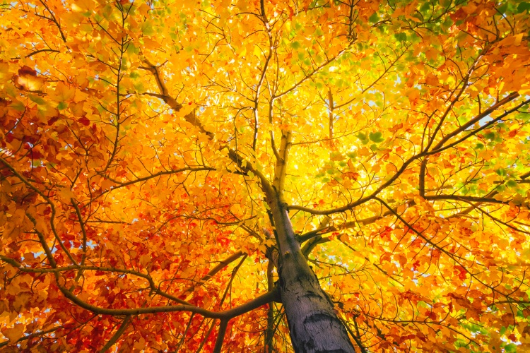 Tree with colorful leafs in fall